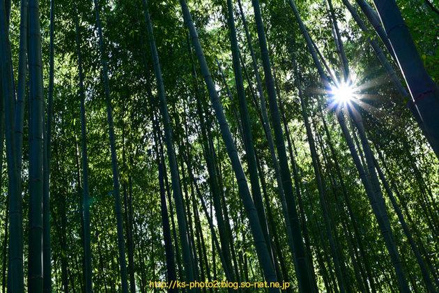 嵯峨嵐山-0501.jpg