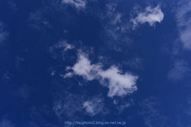 紅葉 大枝-0065.jpg