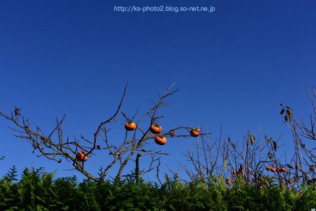 嵯峨嵐山-0568.jpg