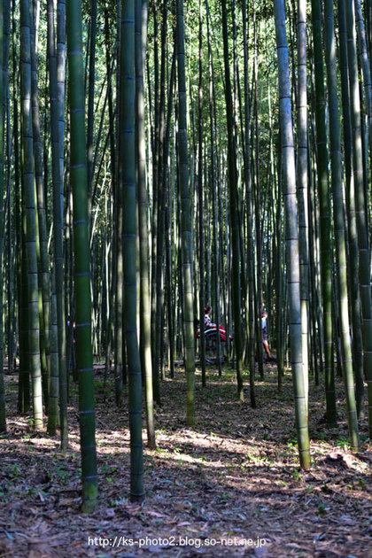 嵯峨嵐山-0581.jpg